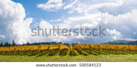 Wine Vineyards, Rows, Trellis and Sky in Autumn Panoramic