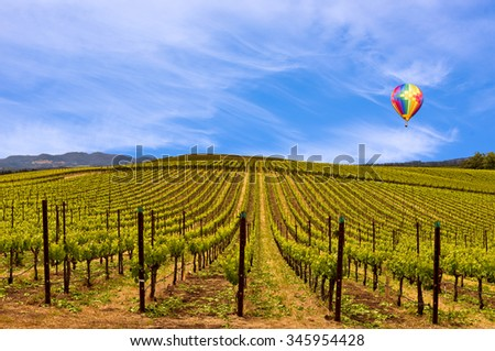 Wine Vineyards, Spring, Sky and Hot Air Balloon