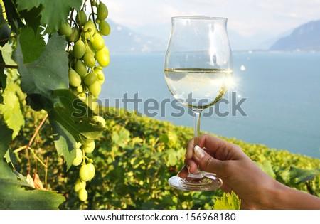 Wineglass in the hand. Lavaux, Switzerland - stock photo