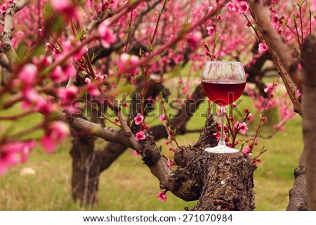 Wineglass with red wine at the peach tree garden - stock photo