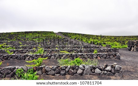 Winery plantation on volcanic ground on Lanzarote, Canary islands, Spain - stock photo