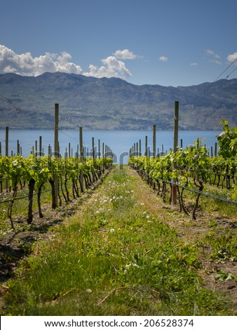 Winery View in Mountains - stock photo