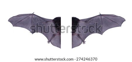 Wing black Bat isolated on white background.  - stock photo