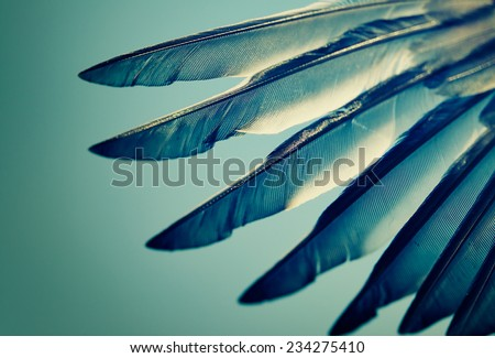 wing of bird against blue sky