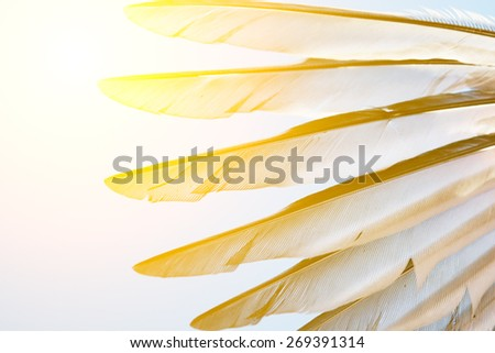 wing of bird against blue sky - stock photo