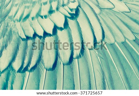 wing of bird close up, x-ray effect effect