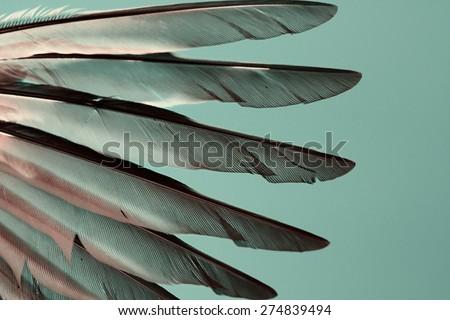 wing of bird closeup, cross-processing effect - stock photo