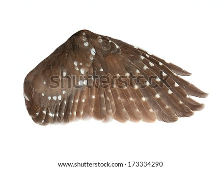 wing of the bird isolated on white - stock photo