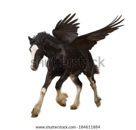 Winged stallion (Pegasus) galloping - stock photo