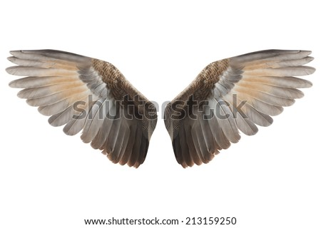 Wings - stock photo