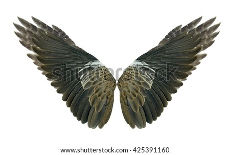 Wings : bird: pinion:wings air:fly Isolated on white