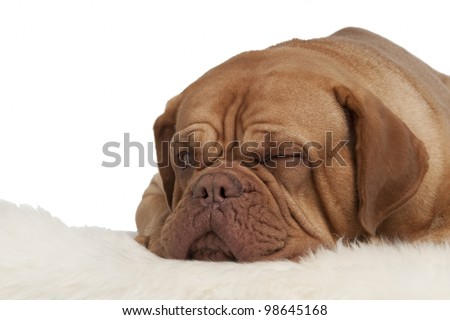 Winking dog lying on white carpet isolated