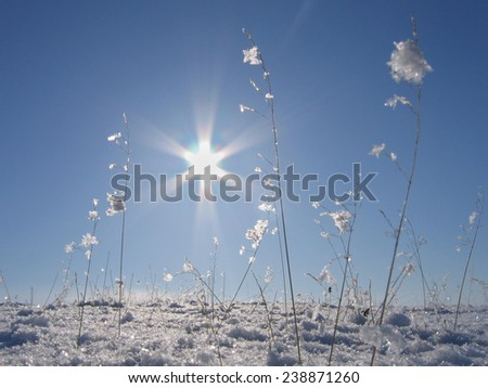 winter abstract plant snow nature cold season - stock photo
