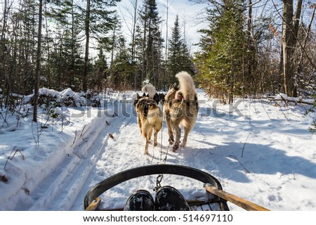 Winter adventure in Quebec: a dog sledge expedition