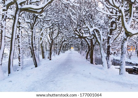 Winter alley in the snowy park