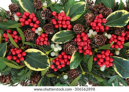 Winter and christmas abstract background with variegated holly, ivy, mistletoe and winter greenery. - stock photo