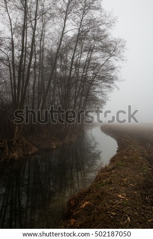 Winter and misty day in the park of the Ticino, Galliate, Novara, Piedmont, Italy