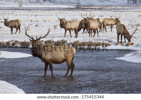 Winter at National Elk Refuge near Jackson, Wyoming, near Grand Teton and Yellowstone National Parks. - stock photo