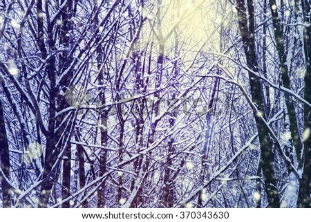 Winter background.Beautiful winter landscape with snow covered trees. - stock photo