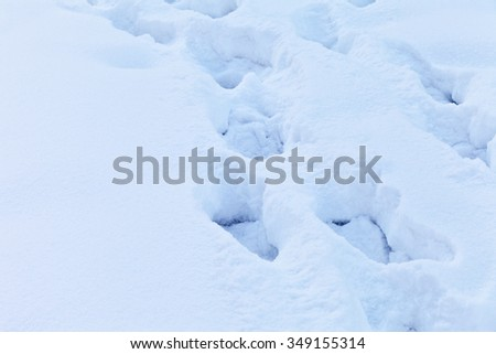 Winter background of fluffy snow with traces - stock photo