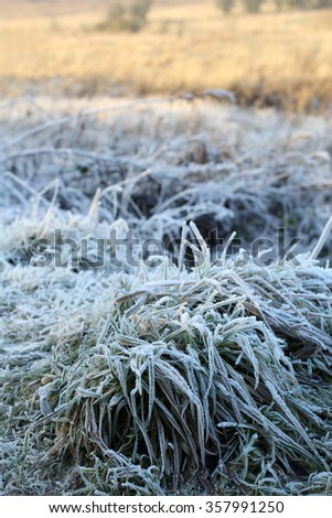 Winter background of frosty grass at the sunset - stock photo