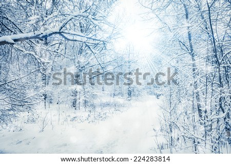 Winter background. Snowfall and trees covered with snow - stock photo