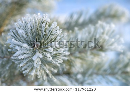 Winter background. Tree in frost