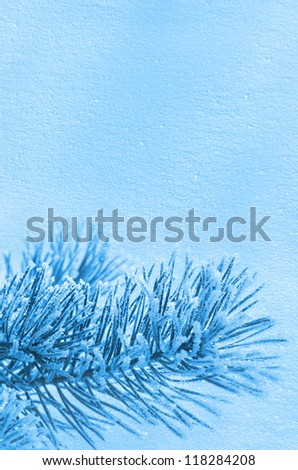 Winter background. Tree in frost - stock photo