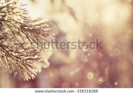 Winter background with a pine branch in hoarfrost in vintage style - stock photo