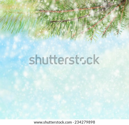 Winter background with branches of spruce tree , blue sky and snow  - stock photo