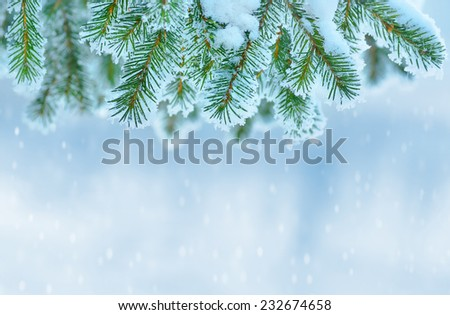 Winter background with snow-covered Christmas tree - stock photo