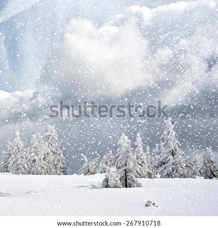 winter background with spruce tree and cottage covered by snow - stock photo