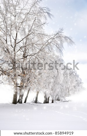 winter background with trees and snow - stock photo