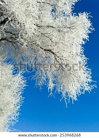 Winter background with trees covered by snow against blue sky.