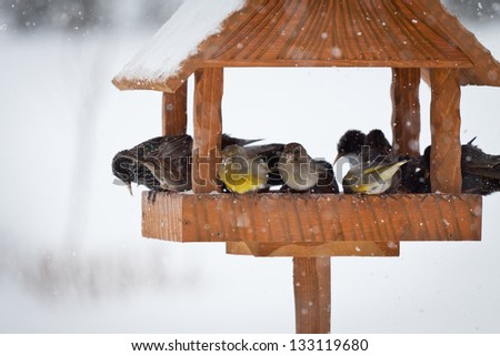 winter birds in animal feeder - stock photo