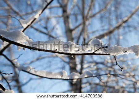 Winter branches covered with snow - stock photo