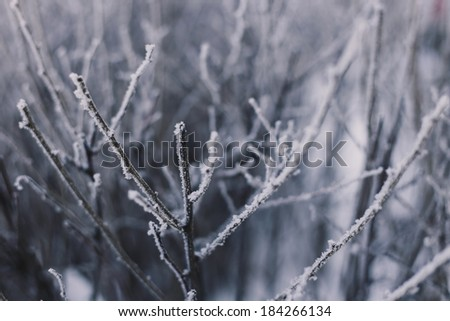 Winter branches with snow - stock photo