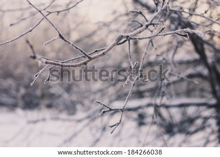Winter branches with snow and beautiful light - stock photo