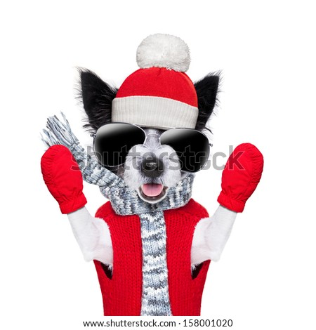 winter christmas dog with red gloves and pullover