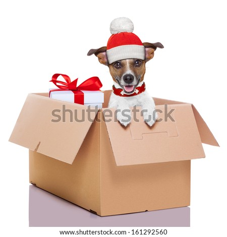 winter christmas mail dog in a very  big moving box with a big present - stock photo