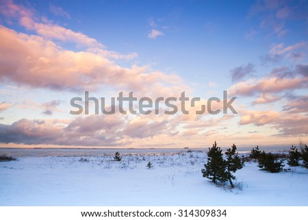 Winter coastal landscape with small pine trees on Baltic Sea coast under colorful cloudy sky. Gulf of Finland, Russia - stock photo