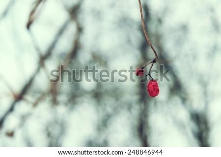 Winter cold plant - stock photo