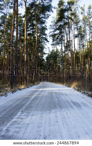 Winter country road with fir forest on the side (overcast day).  - stock photo