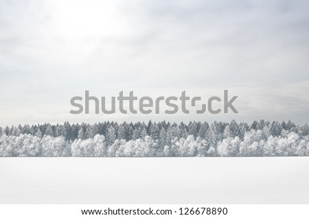 Winter deciduous forest on a foggy day - stock photo