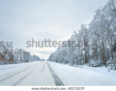 winter dull landscape with ice-covered road and trees at side