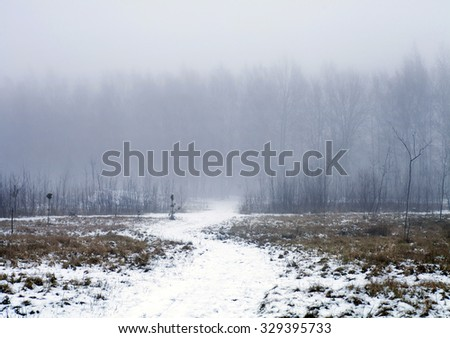 winter evening landscape with falling snow. Fog background with trees and dry grass covered with snow