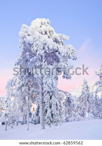 Winter fairy snow forest with pine trees at sunset. Finland - stock photo