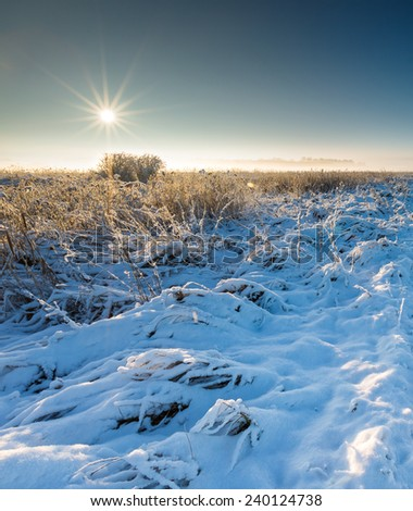 winter field at sunrise landscape