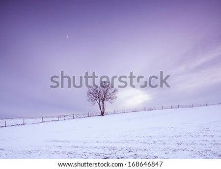 winter field at sunset