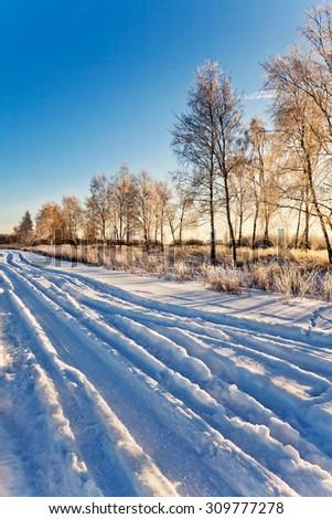 Winter field under blue sky. Nature background  - stock photo